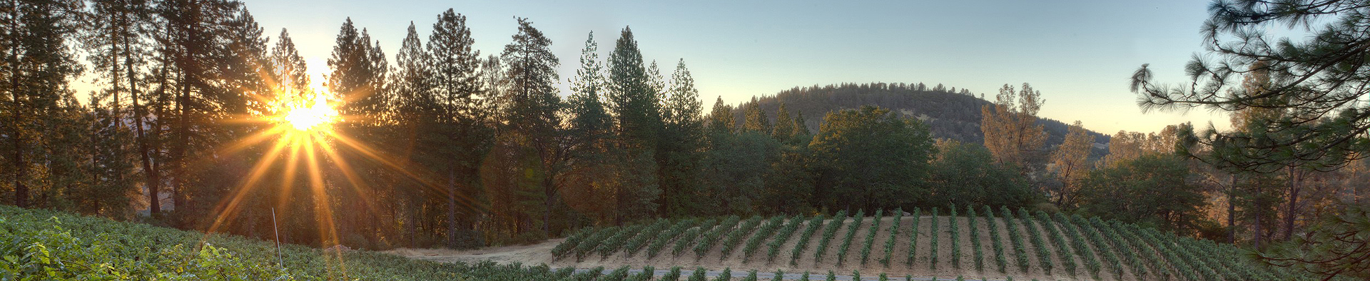 Horseback Vineyard Sunset Courtesy Hawk and Horse 1920x394